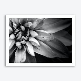 Flower I B&W Art Print