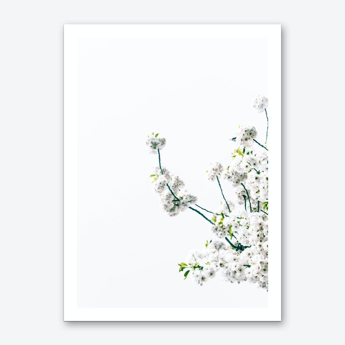 Blossum Branch Art Print