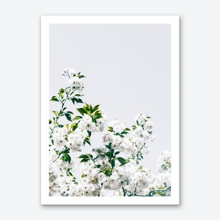 White Blossum Art Print