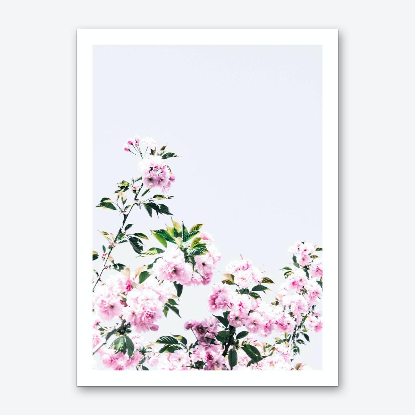 Pink Blossum Art Print