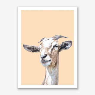 Orange Goat Art Print