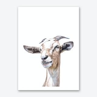 White Goat Art Print