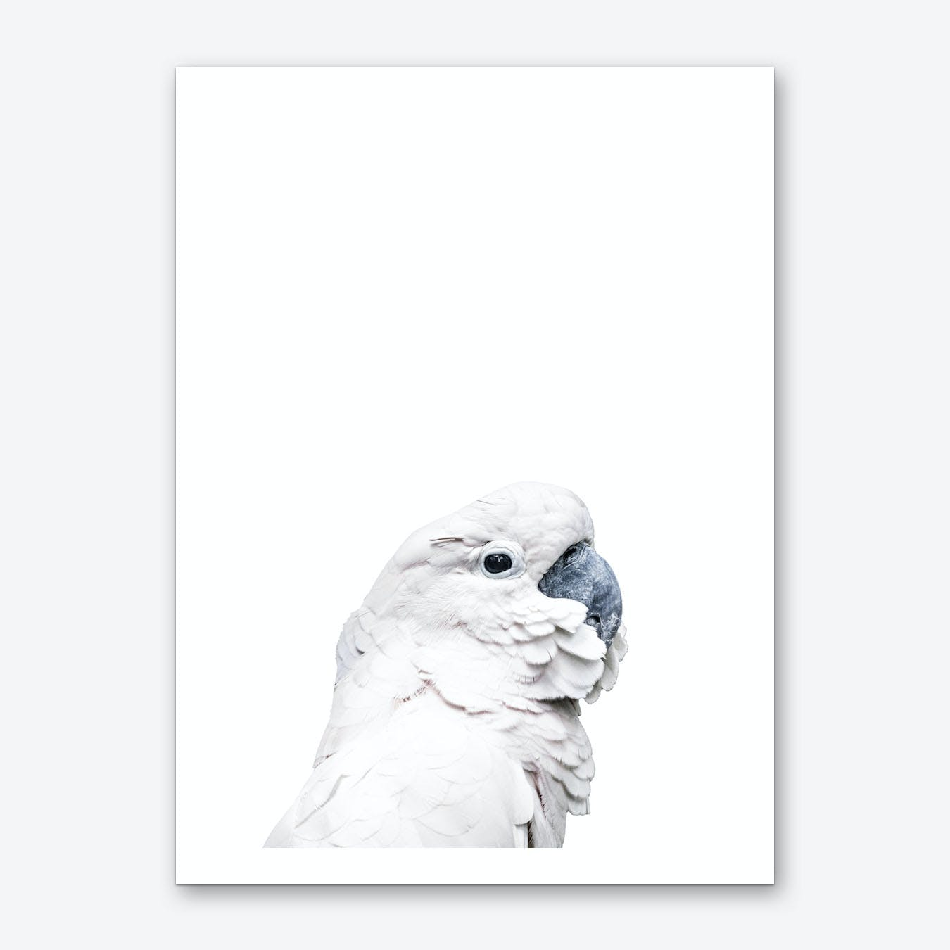 White Cockatoo Art Print