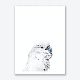 White Cockatoo Art Print