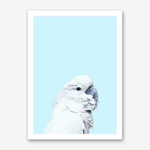 Blue Cockatoo Art Print