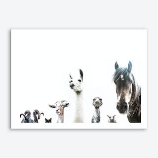 Animal Crew Art Print