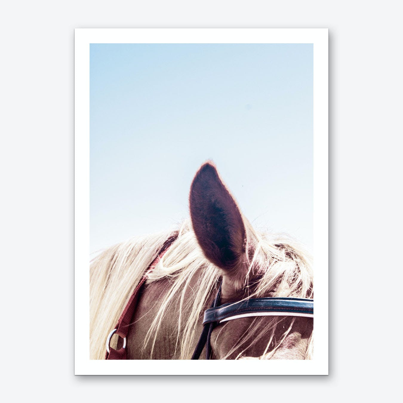 Horse Blue Art Print