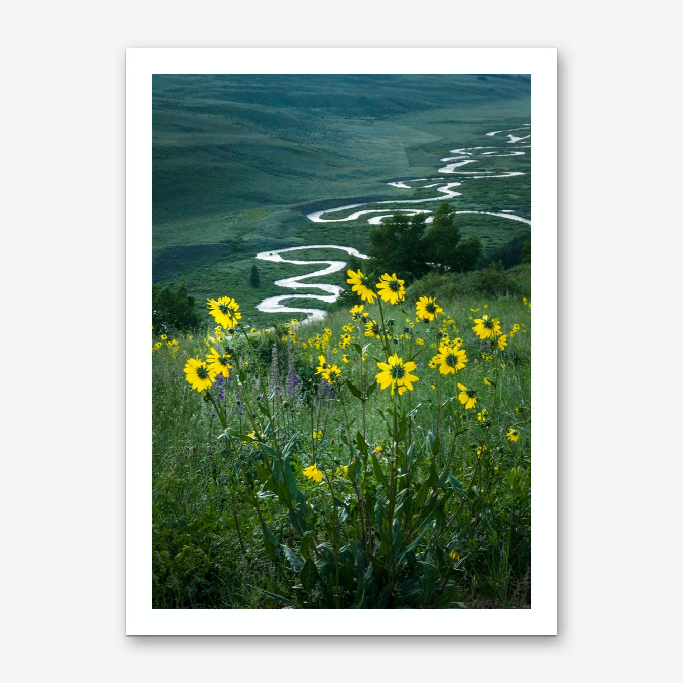 Summer in Crested Butte Art Print