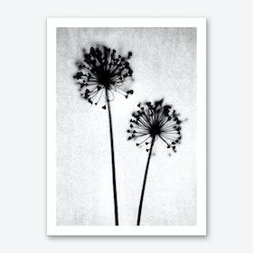 Dandelion I Art Print