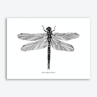 The Dragonfly Art Print
