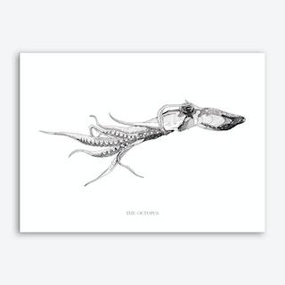 The Octopus Art Print