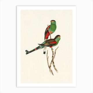 Tropical Parrots Couple Art Print