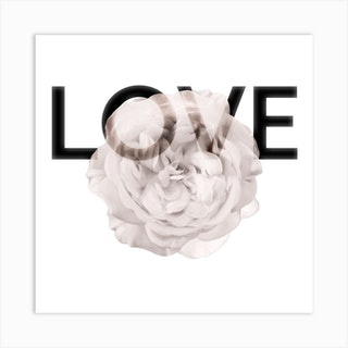 Love Rose Art Print Square Art Print