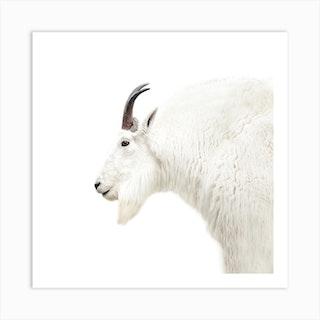 Mountain Goat Square Art Print