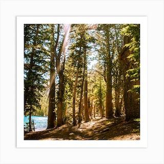 Mcleod Lake Trail Square Art Print