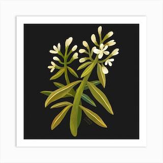 White Wildflower Square Art Print