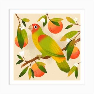 Tangerine Parrot Square Art Print