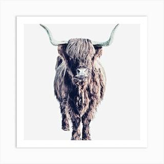 Highland Cattle Colin White Square Art Print