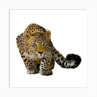 Leopard Stalking White Square Art Print