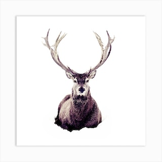 Stag In Snow 3 Square Art Print