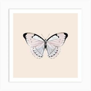Papillion Beige Square Art Print