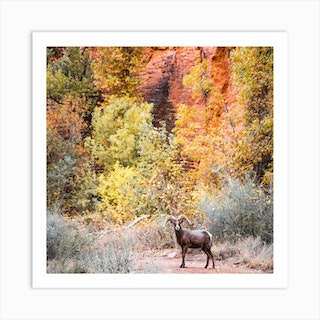 Wildlife With Autumn Leaves Square Art Print