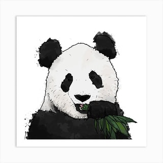 Panda And Bamboo White Square Art Print