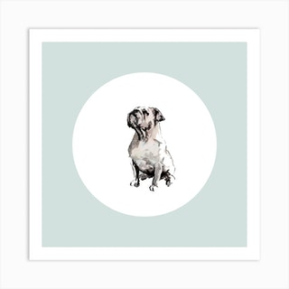 Bulldog On Blue White Square Art Print