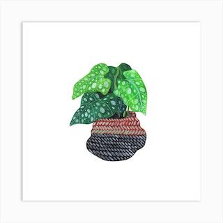 Lungwort Plant Square Art Print