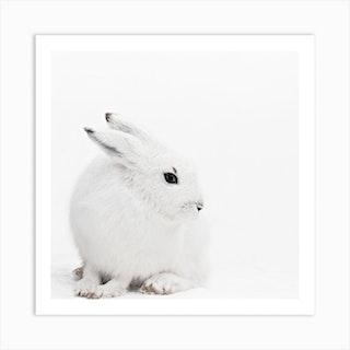 Arctic Hare 1 Square Art Print