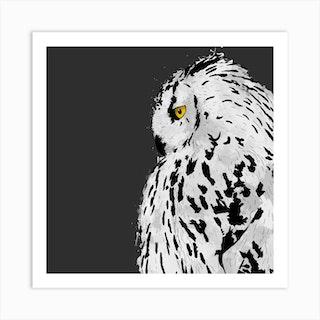 Snowy Owl Square Art Print