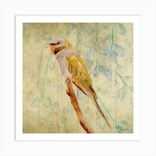 Derbyan Parakeet Square Art Print