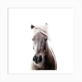 Iceland Horse Sorli Square Art Print