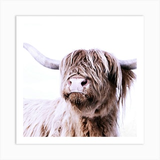 Highland Cattle Frida White Square Art Print