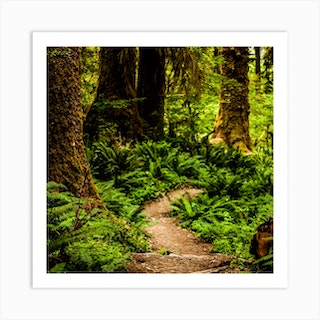 Hoh Rainforest Trail Square Art Print