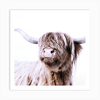 Highland Cattle Frida White Square Art Print