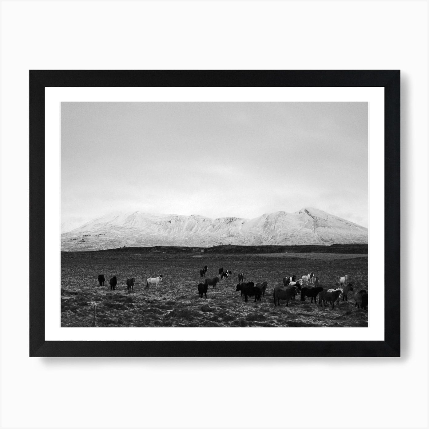 The Herd Wall Art Print Free Shipping Fy