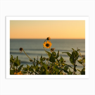 Beach Wildflowers Art Print