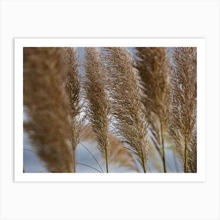 Feather Plants Art Print