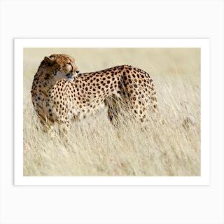 Cheetah Etosha Art Print