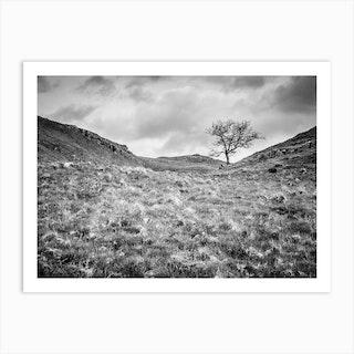 Valley Tree Art Print