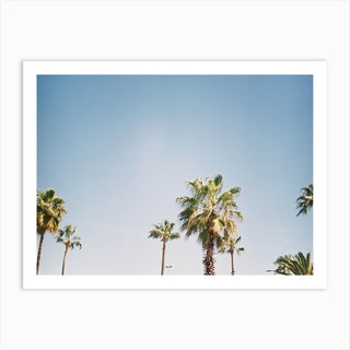 Barcelona Palmtrees Art Print