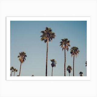 Cali Palms Art Print