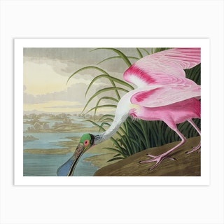 Roseate Spoonbill, Platalea Leucorodia, from 'The Birds Of America', 1836 by John James AudubonArt Print
