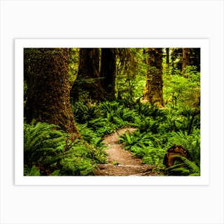 Hoh Rainforest Trail Art Print