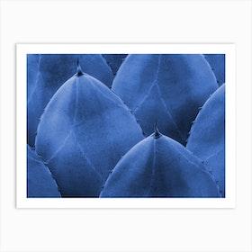 Blue Cactus Close Up Art Print