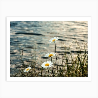 Lake Flowers Art Print