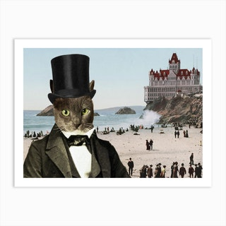 Mr Whiskers at Cliffhouse Art Print