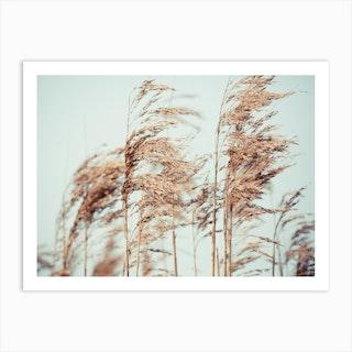 Wild Pampa Grass Reeds  Art Print