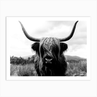Scottish Highland Cattle 2 Black And White Art Print